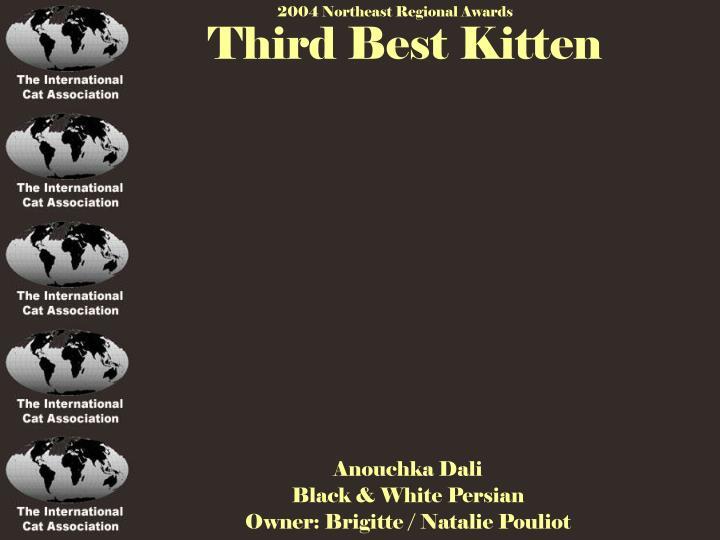 Third Best Kitten