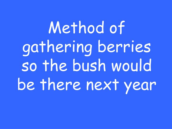 Method of gathering berries so the bush would be there next year