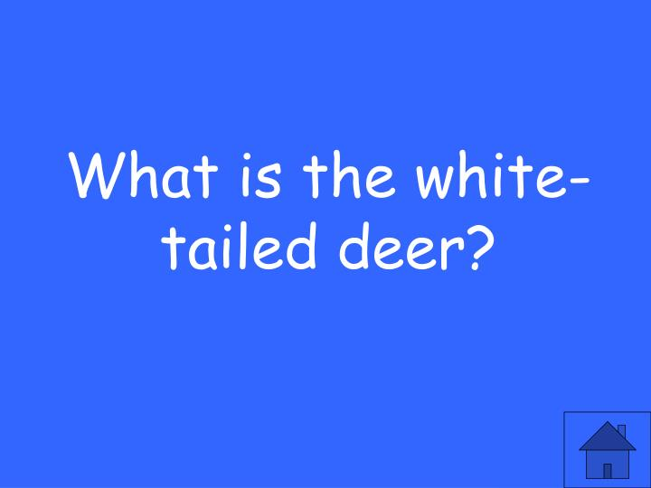 What is the white-tailed deer?