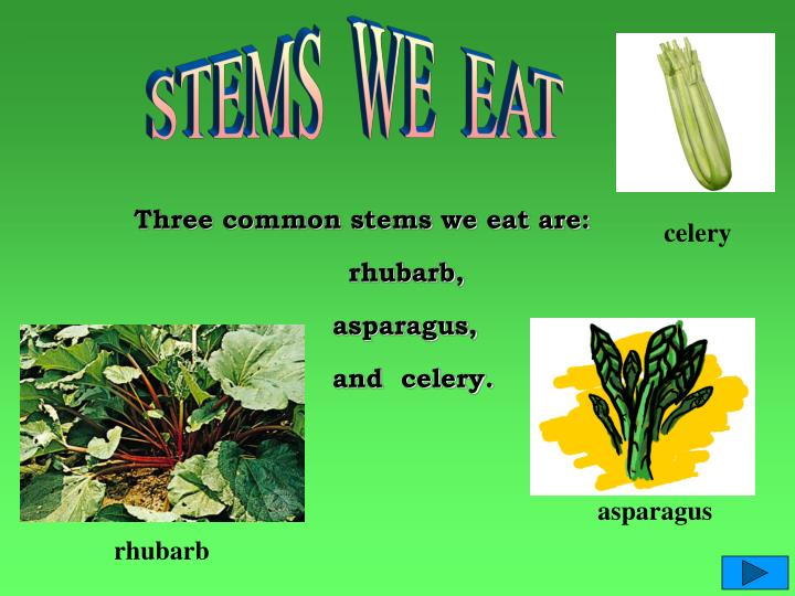 STEMS  WE  EAT
