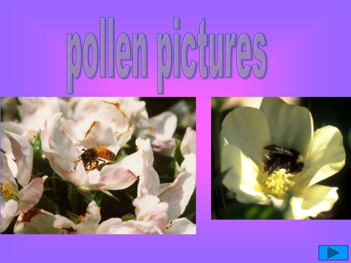 pollen pictures