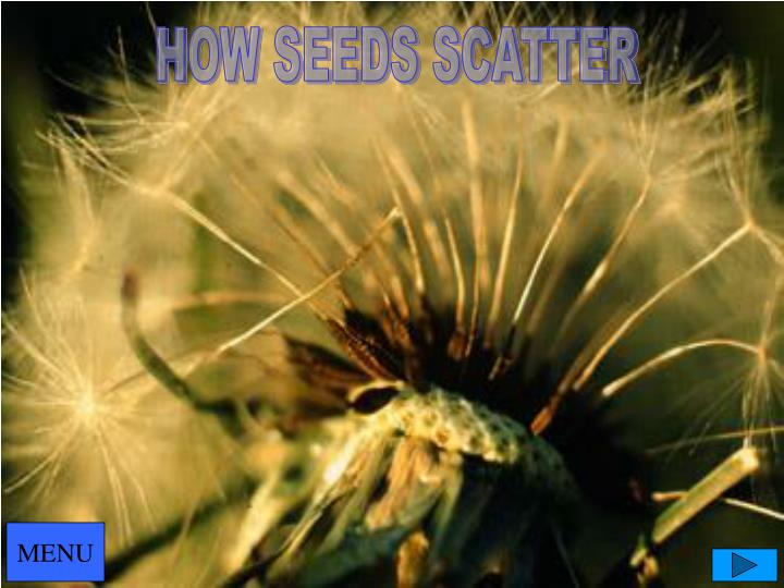 HOW SEEDS SCATTER
