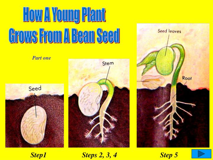 How A Young Plant