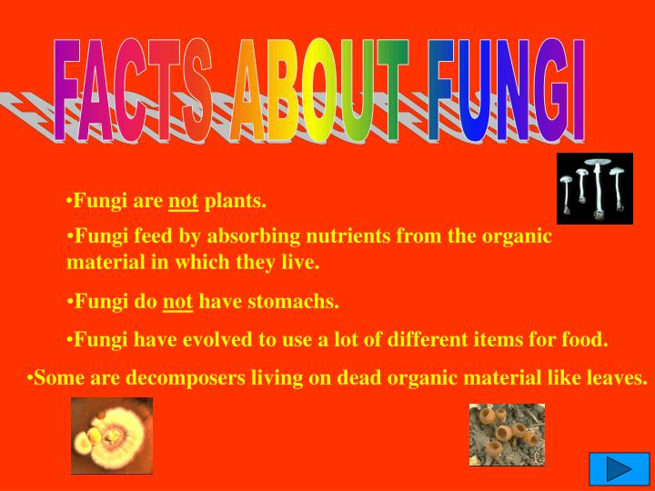 FACTS ABOUT FUNGI