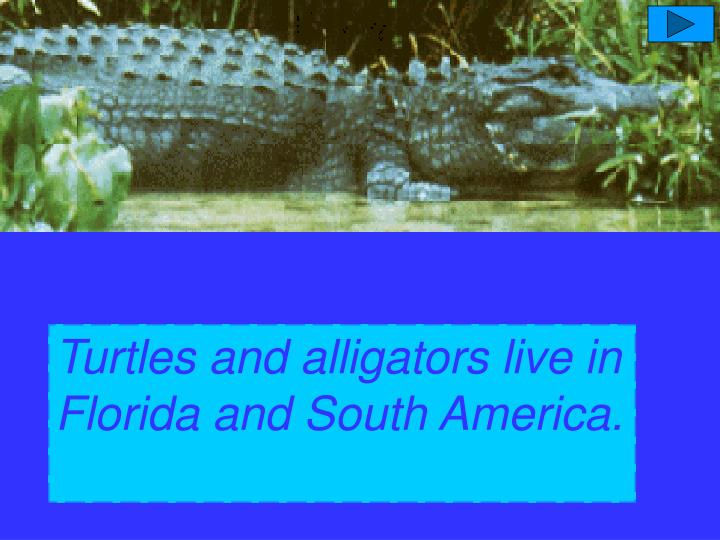 Turtles and alligators  live  in South America