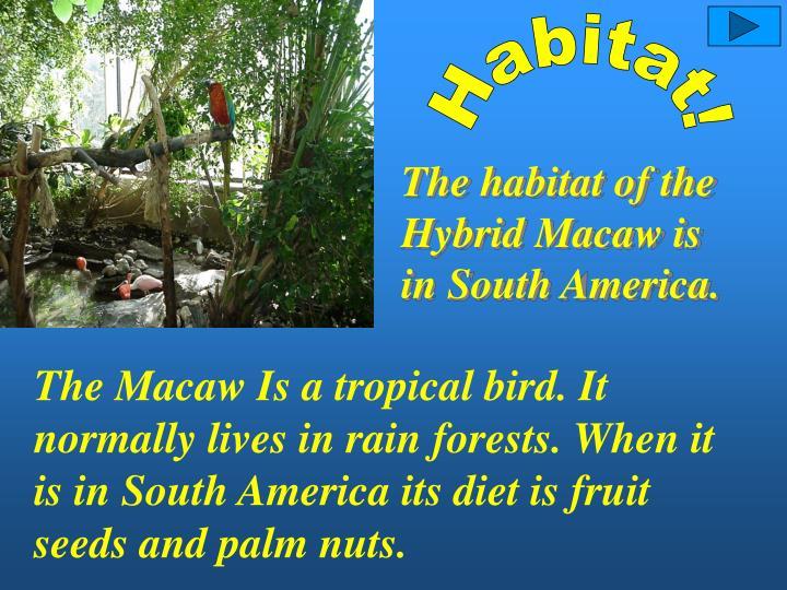 Habitat!