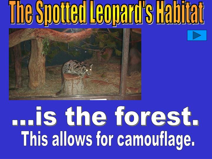 The Spotted Leopard's Habitat