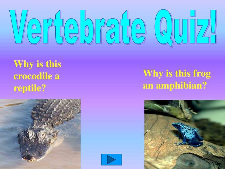 Vertebrate Quiz!