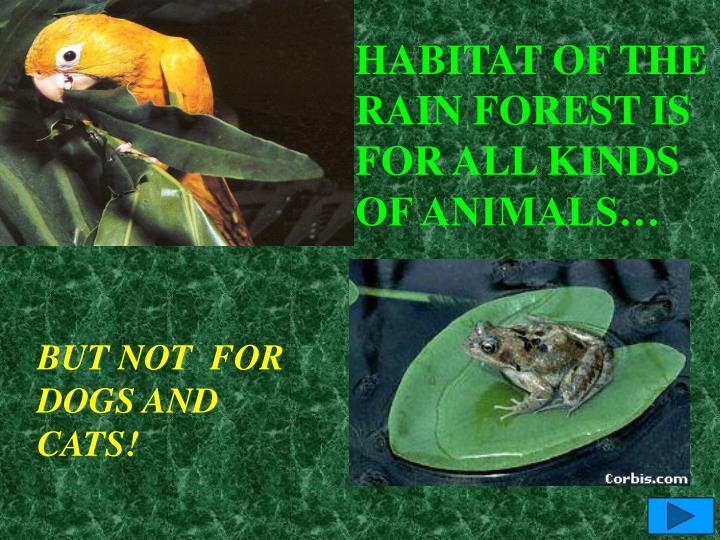 HABITAT OF THE  RAIN FOREST IS  FOR ALL KINDS OF ANIMALS…