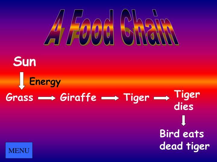 A Food Chain