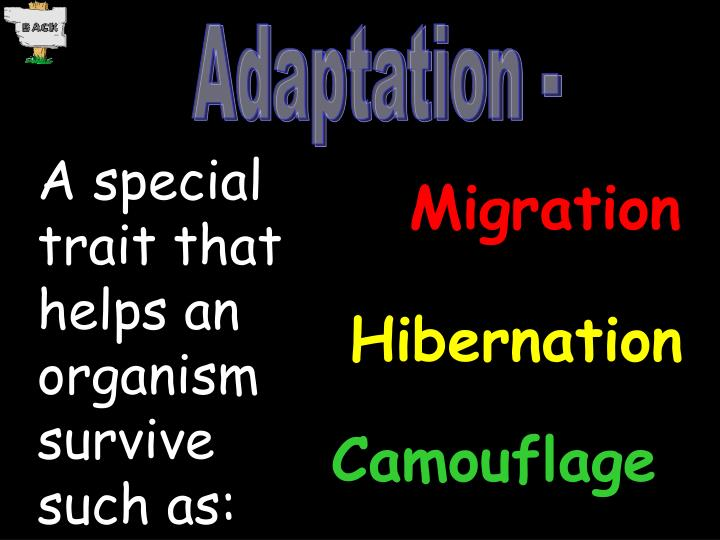 Adaptation -