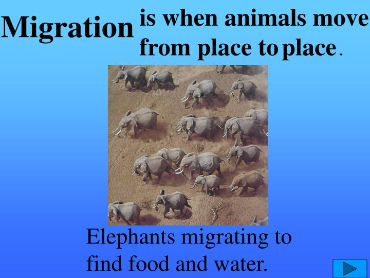 is when animals move from place to