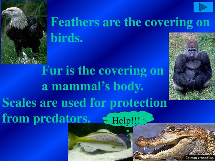 Feathers are the covering on birds.