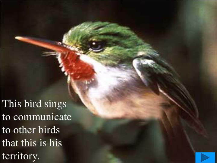 This bird sings to communicate to other birds that this is his territory.
