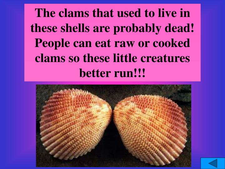 The clams that used to live in these shells are probably dead!  People can eat raw or cooked clams so these little creatures better run!!!