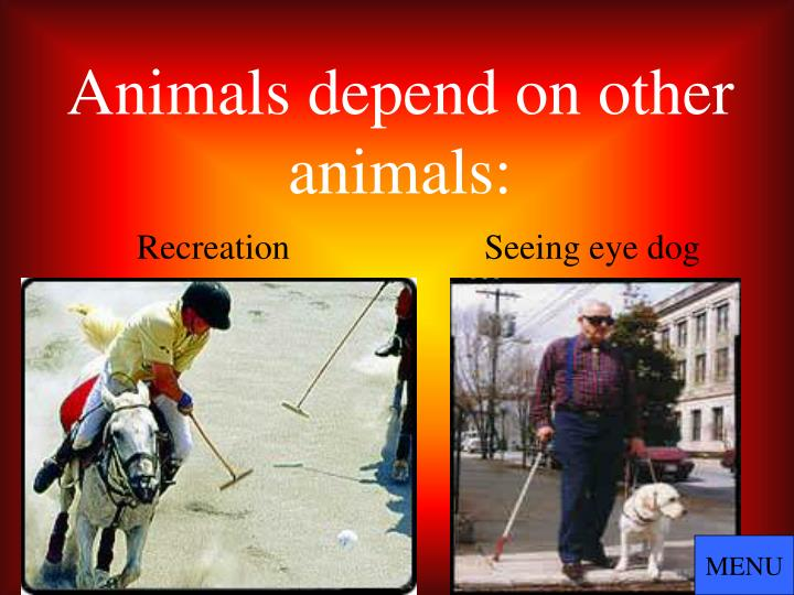 Animals depend on other animals: