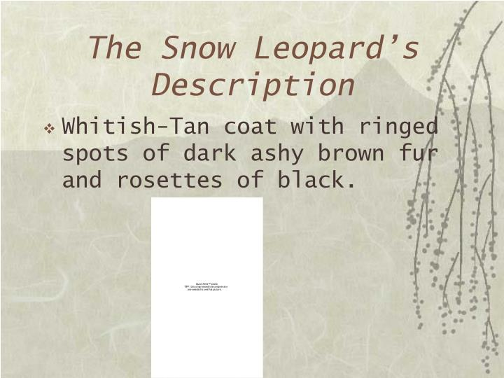 The Snow Leopard's Description