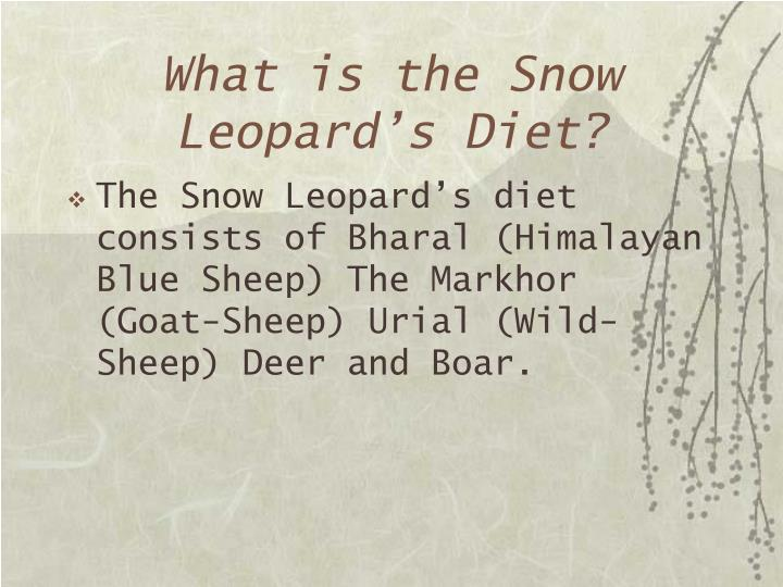 What is the Snow Leopard's Diet?