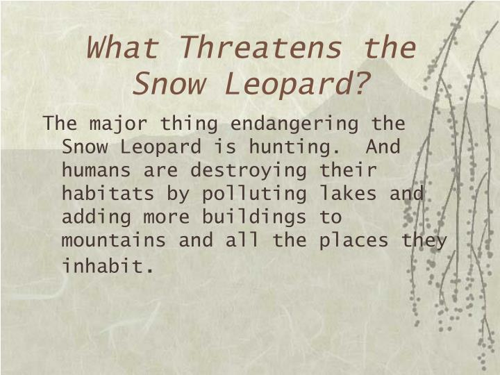 What Threatens the Snow Leopard?
