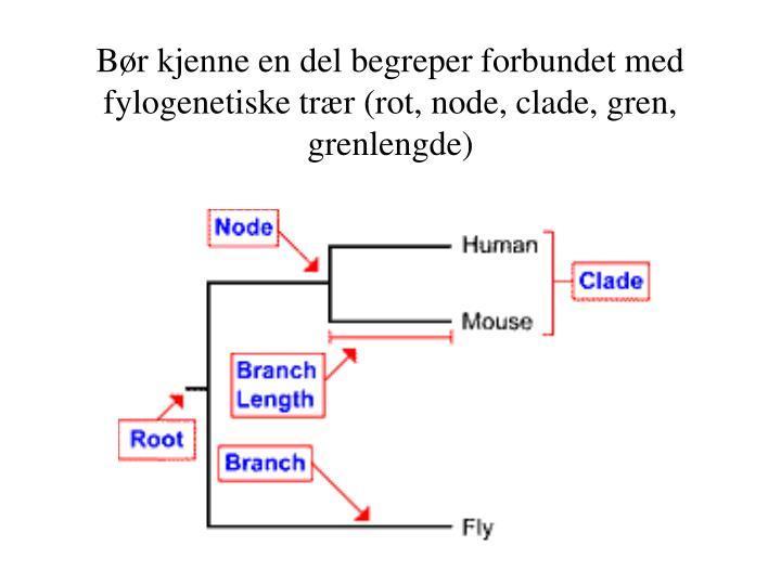 Bør kjenne en del begreper forbundet med fylogenetiske trær (rot, node, clade, gren, grenlengde)