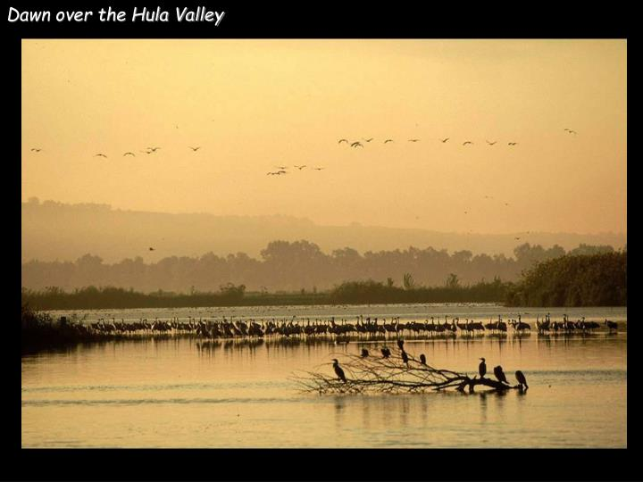 Dawn over the Hula Valley