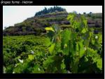 grapes farms hebron