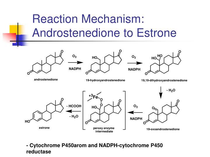Reaction Mechanism: