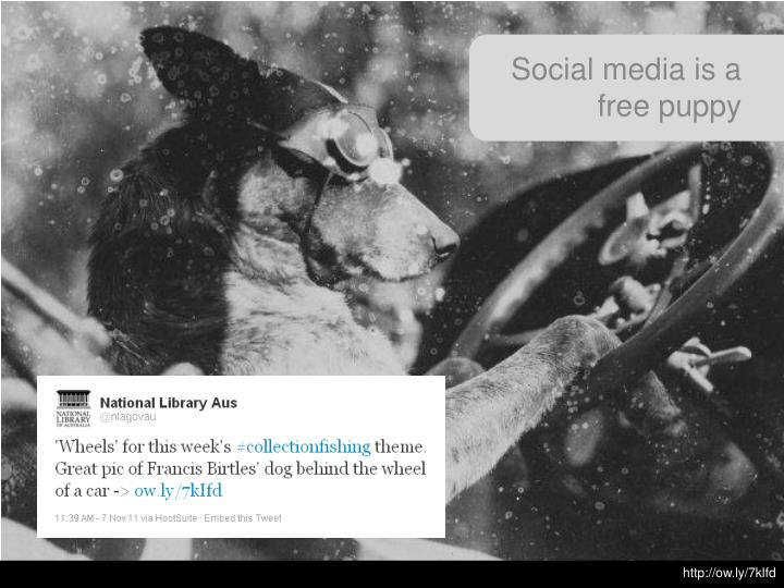 Social media is a free puppy