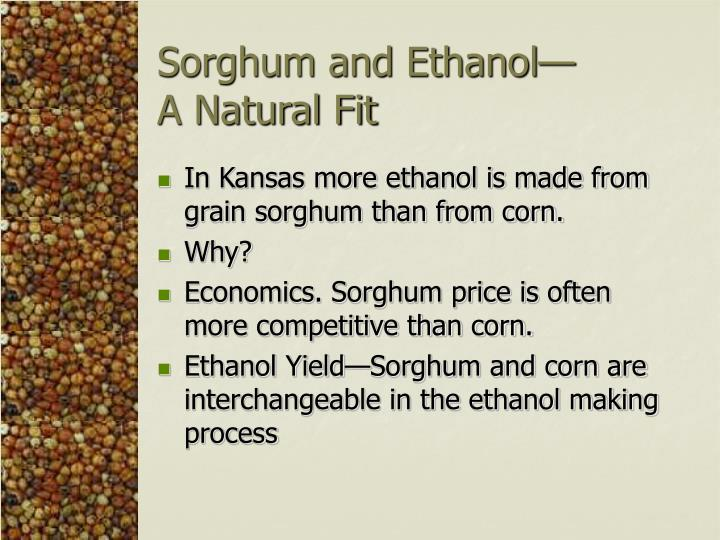 Sorghum and ethanol a natural fit