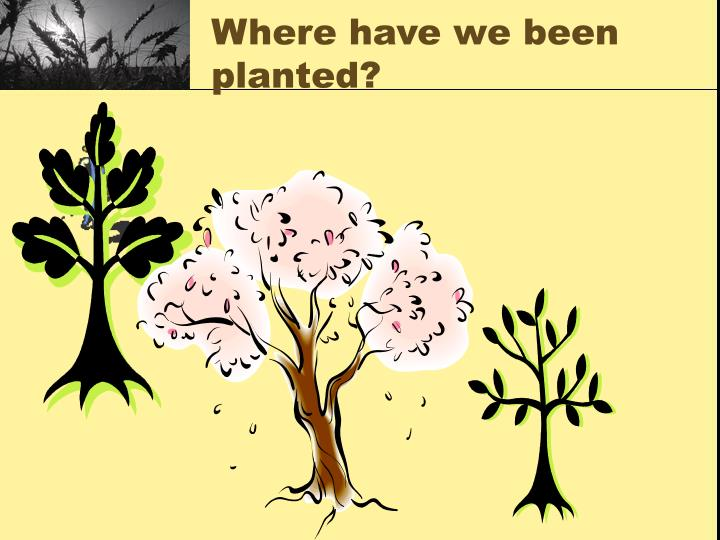 Where have we been planted?
