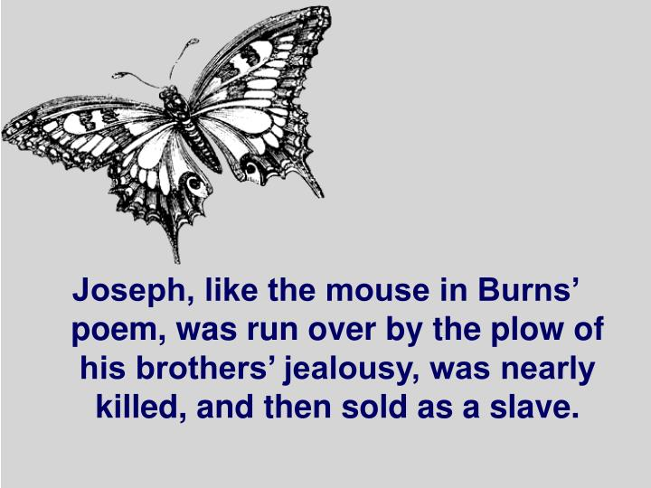 Joseph, like the mouse in Burns' poem, was run over by the plow of his brothers' jealousy, was nearly killed, and then sold as a slave.