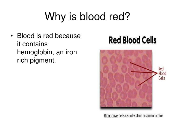 Blood is red because it contains hemoglobin, an iron rich pigment.
