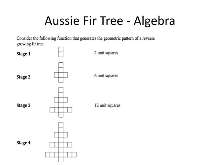 Aussie Fir Tree - Algebra