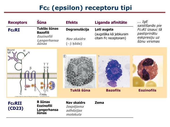 Tuklā šūna              Bazofils                Eozinofils