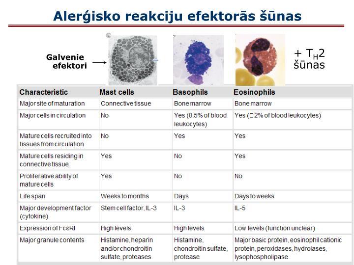 Alerģisko reakciju efektorās šūnas