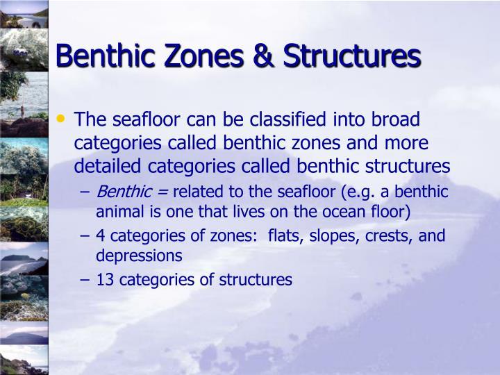 Benthic Zones & Structures