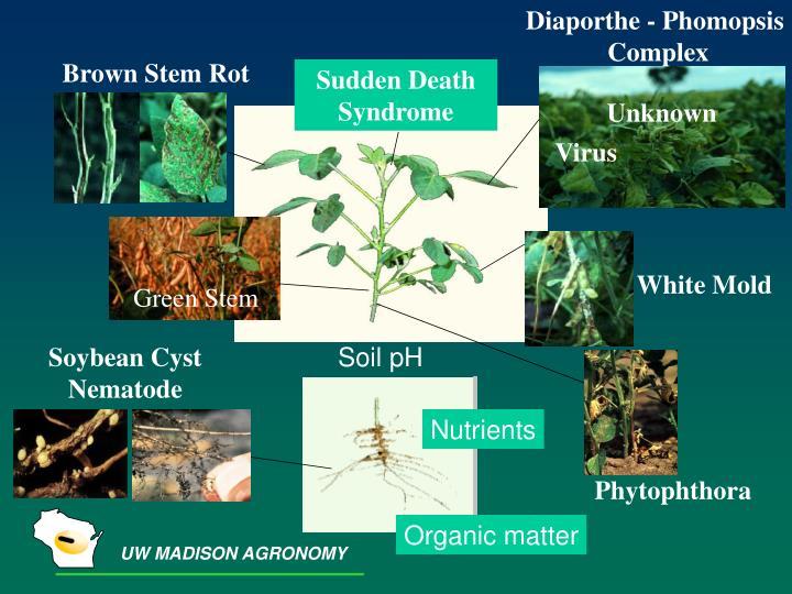 Diaporthe - Phomopsis