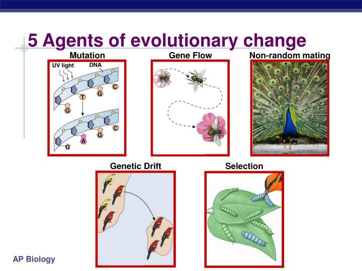 5 Agents of evolutionary change