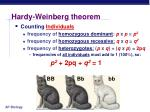 hardy weinberg theorem1