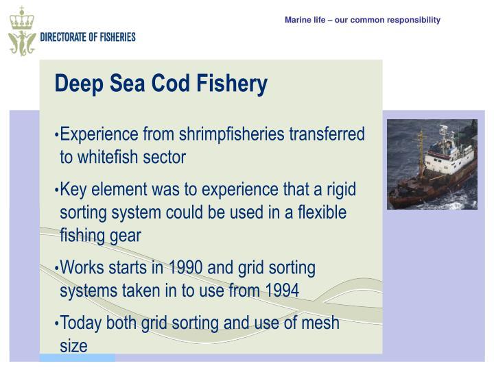 Deep Sea Cod Fishery