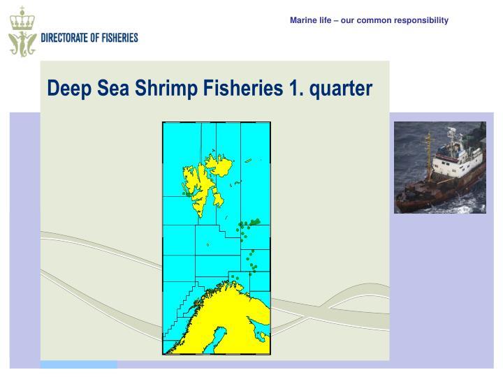 Deep Sea Shrimp Fisheries 1. quarter