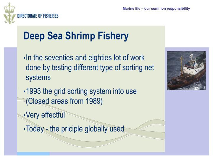 Deep Sea Shrimp Fishery