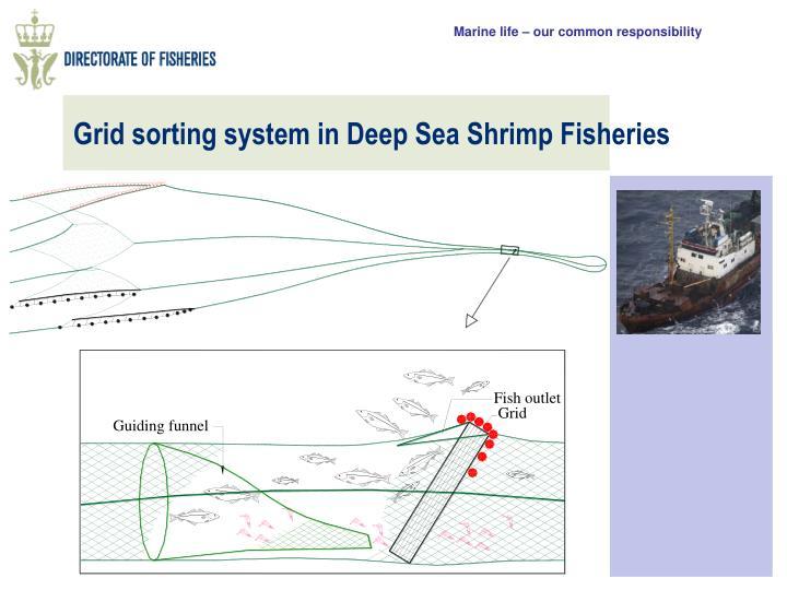 Grid sorting system in Deep Sea Shrimp Fisheries