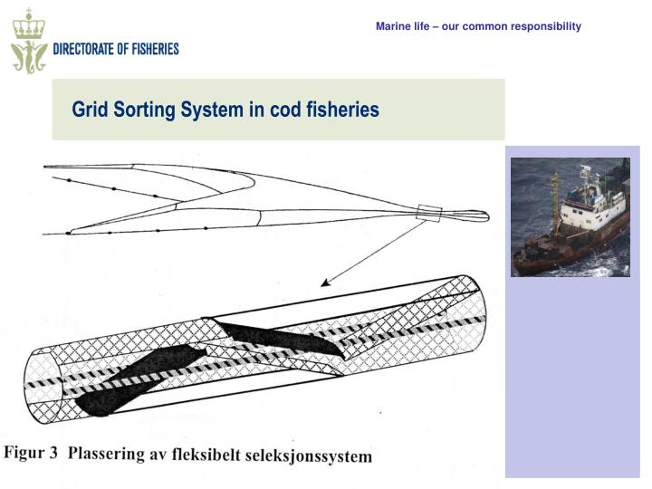 Grid Sorting System in cod fisheries