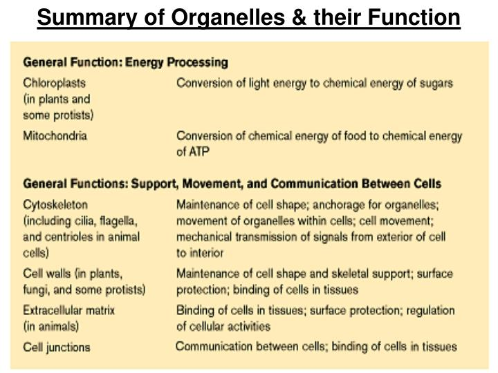 Summary of Organelles & their Function