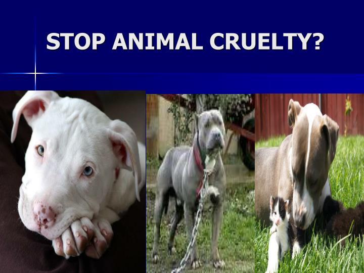 STOP ANIMAL CRUELTY?