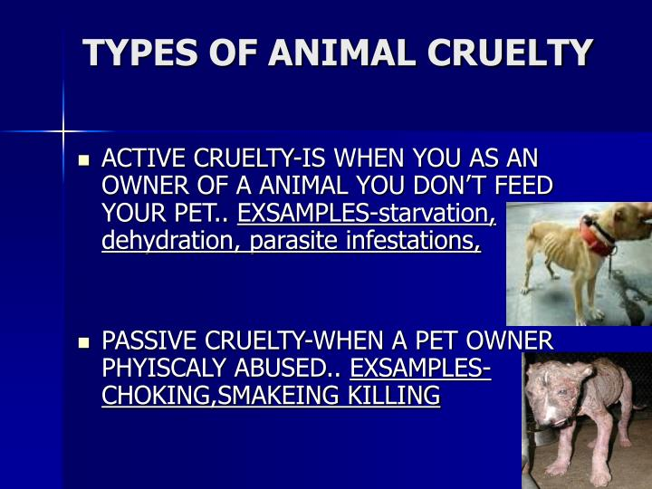 Types of animal cruelty