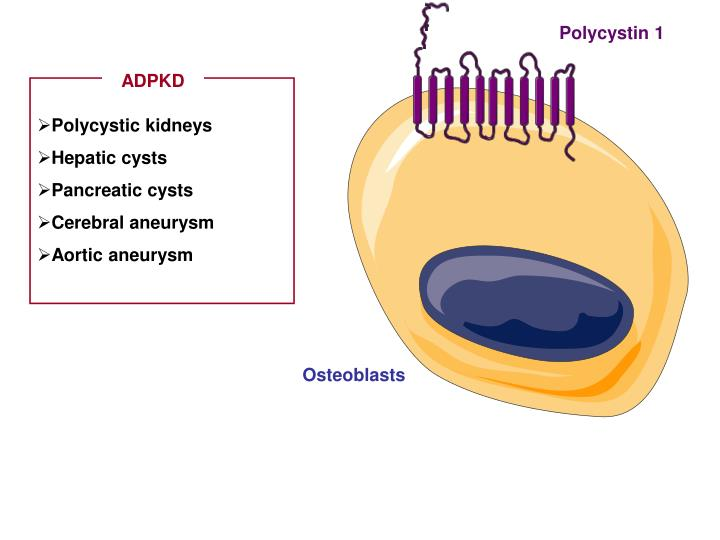 Polycystin 1