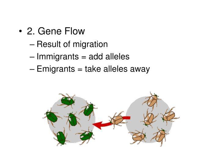 2. Gene Flow