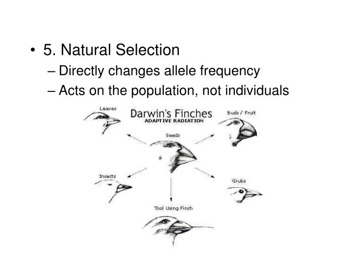 5. Natural Selection